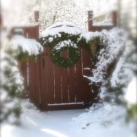 Escape To 'NARNIA' In A Winter's Garden...